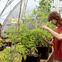 Students cultivating plants in the greenhouse